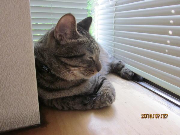出窓から外を見るQooくん